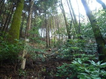 P1290492左の植林支谷.JPG
