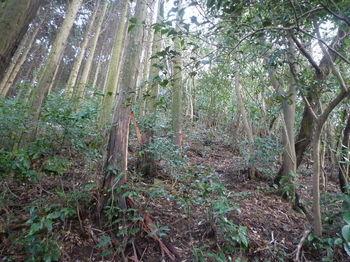 P1290514左植林.JPG