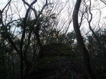 P1290520岩上.JPG