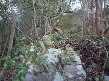 P1290522前方大岩④.JPG