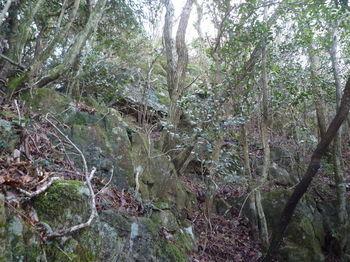 P1290528岩凌帯を登る.JPG