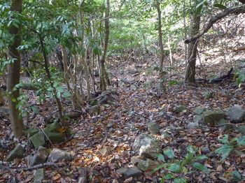 P1290572角石が多い山道.JPG