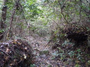 P1290587掘割り状の山道.JPG
