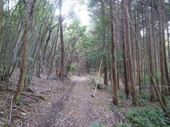 P1290593植林沿い.JPG