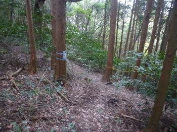 P1290667登山道出合い.JPG