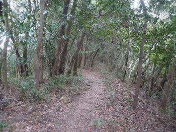 P1290674登山道(530m付近).JPG