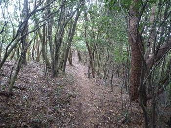 P1290681登山道(570m付近).JPG