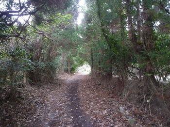 P1290784果樹園沿いの舗装林道.JPG