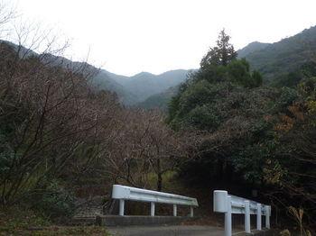P1290785林道から竜王山山頂方向.JPG