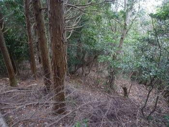 P1290876植林境.JPG