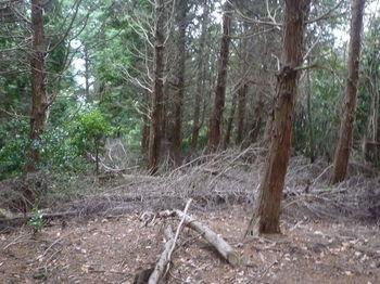 P1290877伐採木が散乱する植林境.JPG