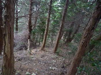 P1290879植林境.JPG