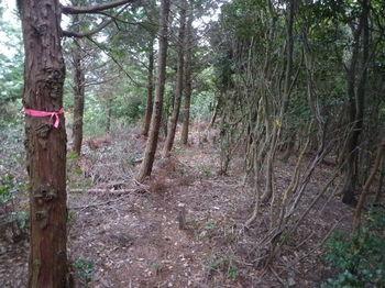 P1290894枝打ちされた植林境.JPG