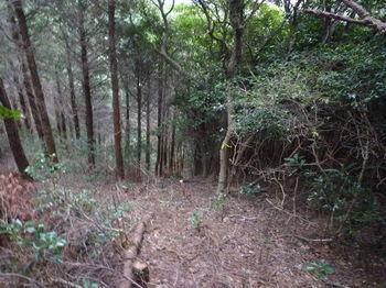 P1290897左斜面の植林境.JPG