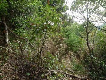 P1300001灌木等ヤブ.JPG