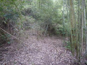 P1300015林道分岐.JPG