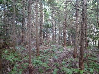 P1300080植林境.JPG