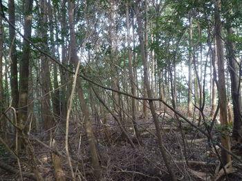 P1300084荒れ植林ピーク.JPG
