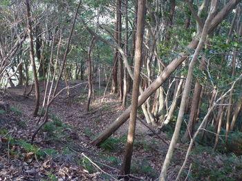P1300110右ヒノキ植林出合い.JPG