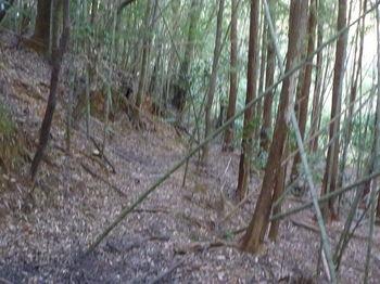 P1300117左へ向かう・植林境.JPG