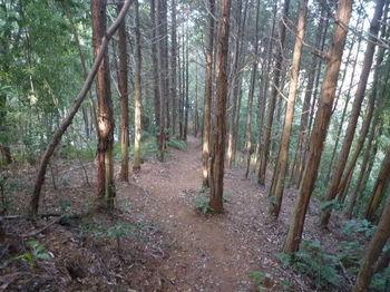 P1300122植林尾根上の道.JPG