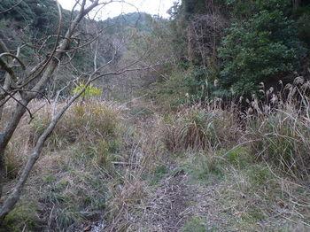 P1300134荒地沿い.JPG