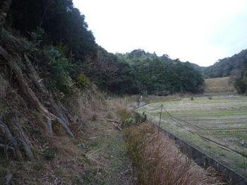 P1300172やや荒れた林道.JPG