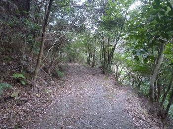 P1300176山道が分岐.JPG