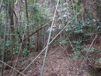 P1300181左の荒れ林道.JPG