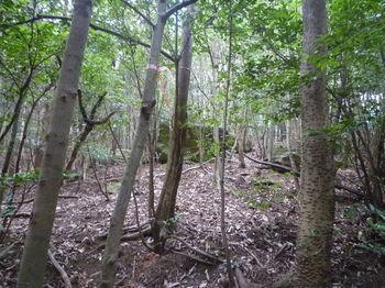 P1300209雑木林に変わる.JPG
