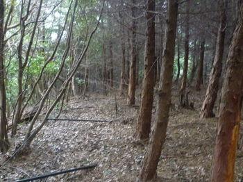P1300220ヒノキ植林境.JPG
