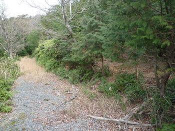 P1300226林道下降地点(逆方向).JPG