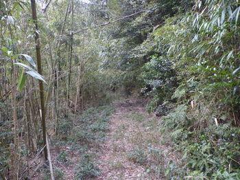 P1300241林道・竹林沿い.JPG