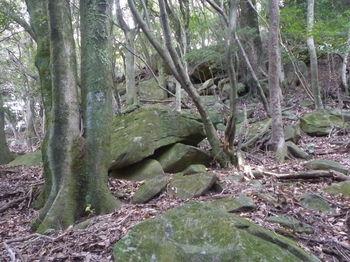 P1300262岩場を左へ巻く.JPG