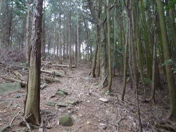 P1300285植林沿い.JPG