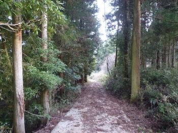 P1300330舗装林道.JPG