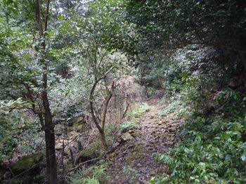 P1300444ガレ石の山道.JPG