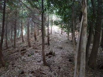 P1300451植林尾根へ出る.JPG