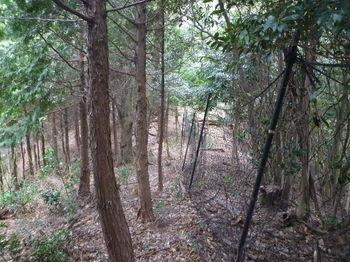 P1300453植林境・ネット沿い.JPG