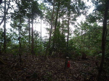P1300462 320mヒノキ植林境.JPG