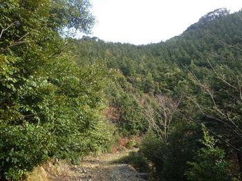 P1300587取り付きの植林斜面.JPG