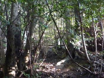 P1300595左の雑木林へ逃げる.JPG