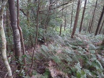 P1300646植林境(北東尾根).JPG