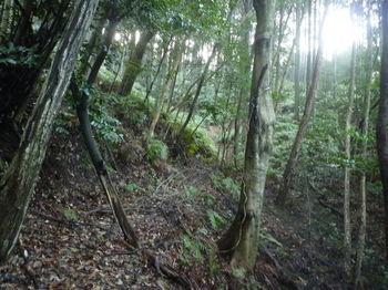 P1300722山道.JPG