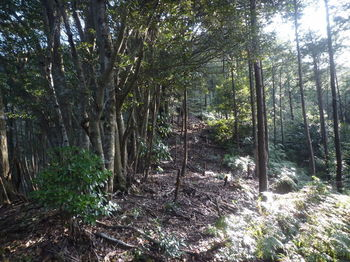 P1300732植林境.JPG