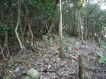 P1300733植林頂部.JPG