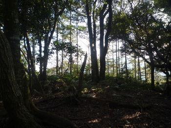 P1300745 380mピーク・ヒノキ植林境.JPG