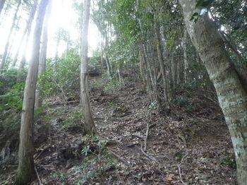 P1300747植林境上り.JPG
