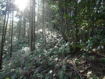 P1300753植林出合い・上り.JPG