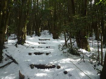 P1300796登山道.JPG